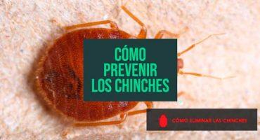 como prevenir los chinches