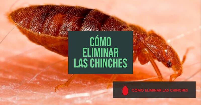 eliminar las chinches