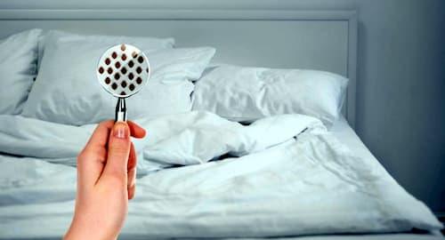 fotos de chinches de cama